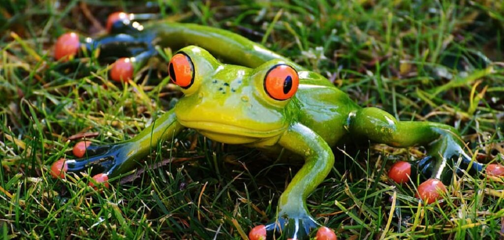 What Happens When a Dog Eats a Frog