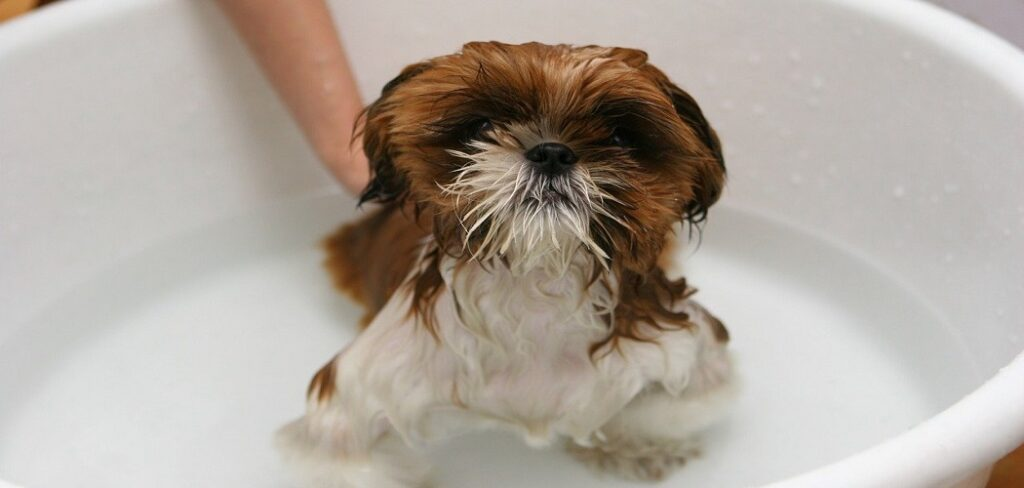 When Can I Bathe My Dog After Giving Birth