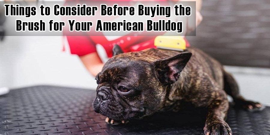 Things to Consider Before Buying the Brush for Your American Bulldog