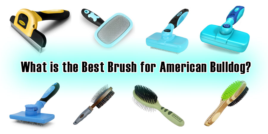 What is the Best Brush for American Bulldog