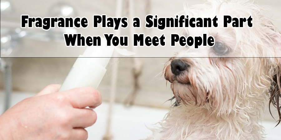 Fragrance Plays a Significant Part When You Meet People